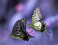 Two Butterflies-EOP Demon Training Camp