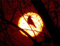 鳥を夢見て