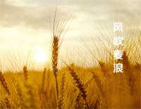 風吹麥浪-2013央視春晚-EOP教學曲