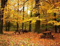 Autumn Leaves-Yiruma
