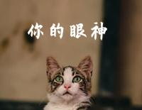 The Spirit of Your Eyes-Tsai Chin