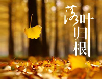 Falling Leaf Returns to Roots(lady's version)-Leehom Wang