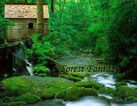 Forest Fantasy-Yiruma