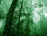 柔和-『迷雾森林』Bandari