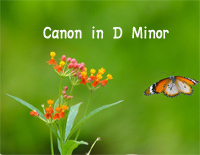 Canon in D Minor-Johann Pachelbel