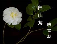Camellia-Chen Xuening