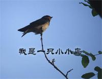私がちっちゃな鳥である-趙伝