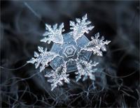 Heaven-Snowflakes-Florian Bur